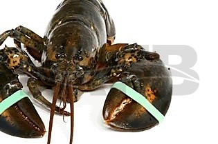 Lobsterbands and tool - picture 1