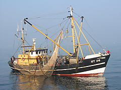 WEGA 2, STEEL BEAMTRAWLER boat for sale