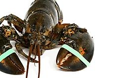 Link to picture 1 for Lobsterbands and tool