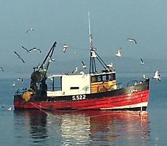 D-IRIS, WOODEN TRAWLER boat for sale