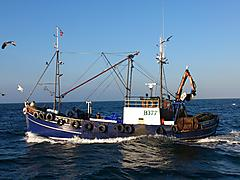 nobles of girvan scalloper trawler - village belle - ID:60964