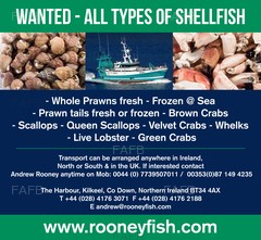 WANTED, Prawns, Brown Crab, Whelks and Scallops - ID:74010