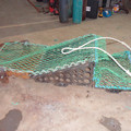 connolly shellfish sorter - picture 2